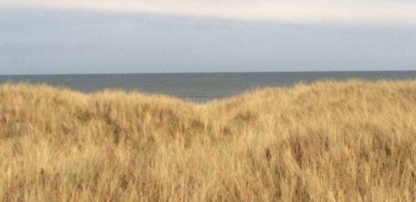 An Open Field Credit: Luke Pell for Fevered Sleep. www.anopenfield.co.uk